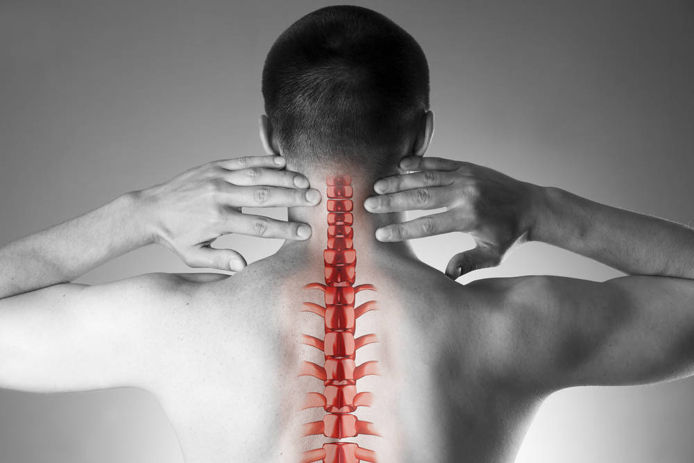 La columna vertebral, esa gran olvidada