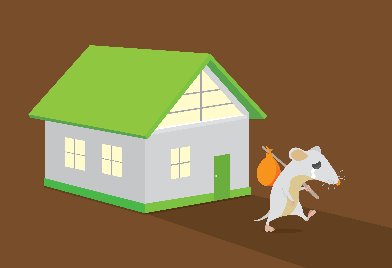 ¿Ratas en casa? Consejos para evitarlas